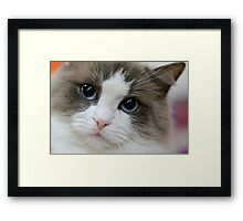 Blue Eyes... Framed Print