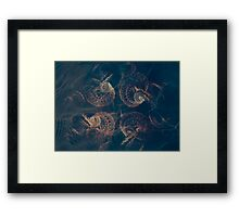 Four From The Deep Framed Print