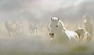 Horses Run 2 by Igor Zenin
