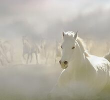 Horses Run 2 by Igor Zenin