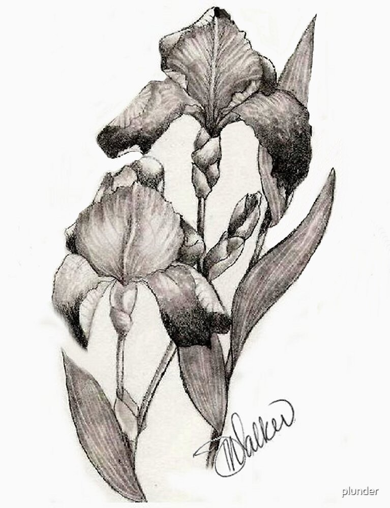 Iris Illustration by plunder