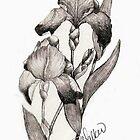 Iris Illustration by plunder