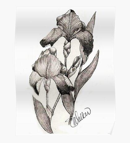 Iris Illustration Poster
