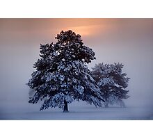 Ashdown Forrest Snow Scene Photographic Print