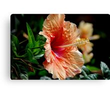 Typical Flower Canvas Print