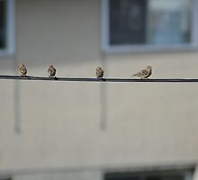 Birds on the line by Paul Gloor