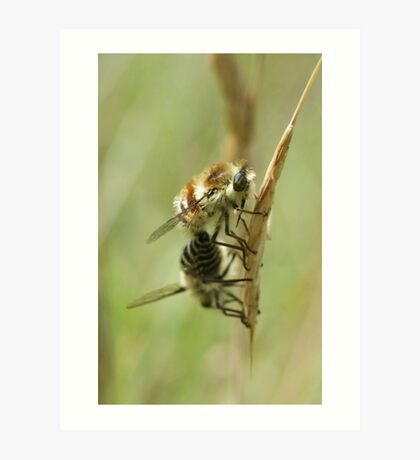 Bee Flies Art Print