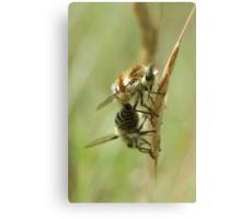 Bee Flies Canvas Print