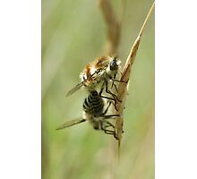 Bee Flies Photographic Print