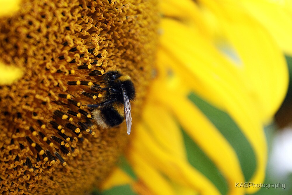 Busy Bumble by KAGPhotography