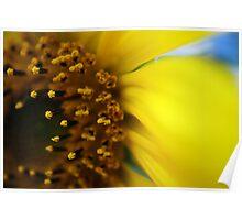 Flowering Sunshine Poster