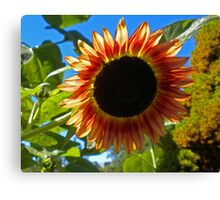 Summer Sun Shining Through. Canvas Print