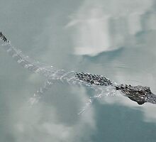 Baby Alligator in the Lake by Anangeli
