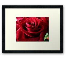 The Red Rose, like Love, is full of mystery Framed Print