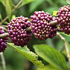 Beautyberry by Irina777