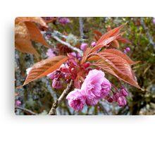 Gaeshi Cherry Blossom Canvas Print