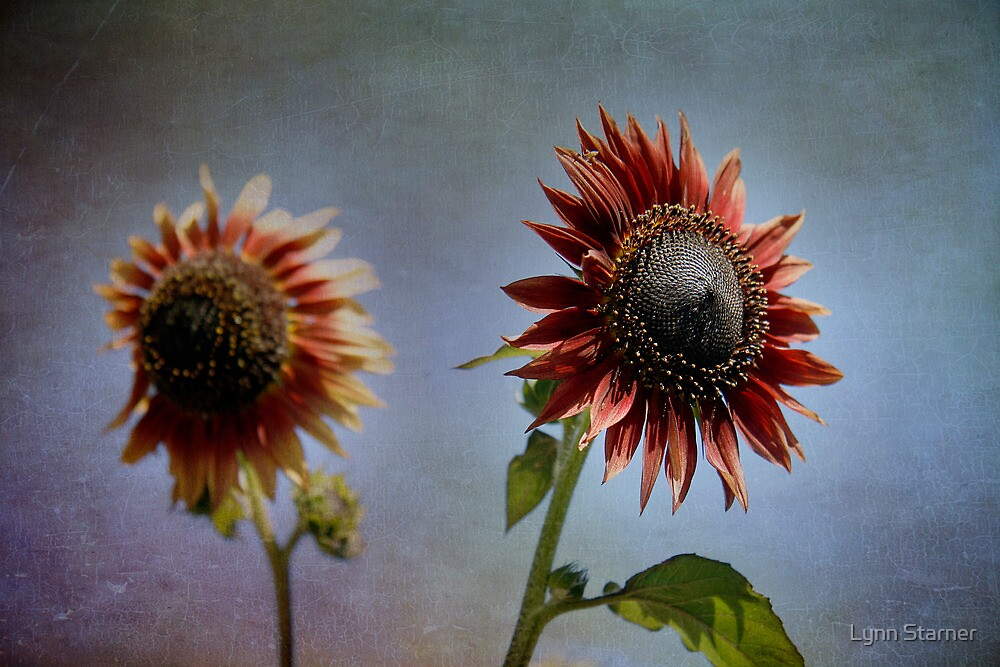 Dancing Sunflowers by Lynn Starner
