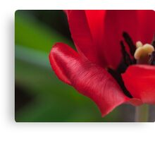 Red in Full Bloom Canvas Print
