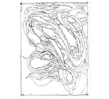 cudabeen a dragon Photographic Print