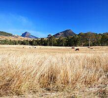 Winter in Queensland by Marian Moore