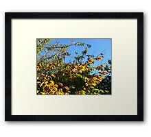 Cloudless Blue Sky and Autumn Leaves Framed Print