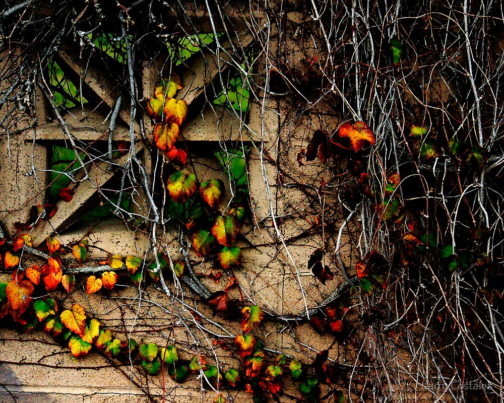 Wildomar Cemetery Wall by Larry Costales