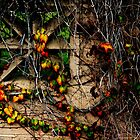 Wildomar Cemetery Wall by Larry3