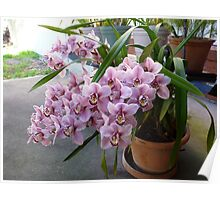 Orchid plant Poster