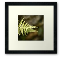 Fern Abstract Framed Print