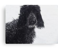 Black and White in Color Canvas Print