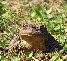 A large toad by Irina777