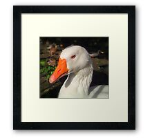 Blue Eye's Framed Print