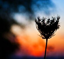 Sunset Weed by Denise Abé