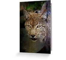 Caracal (The Persian Lynx) Greeting Card
