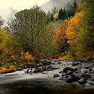 Simple Beauty ~ Calapooya River ~ by Charles &amp; Patricia   Harkins ~ Picture Oregon