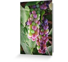 The colours of grape! Greeting Card