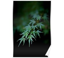 Maple in Green Kyoto Poster