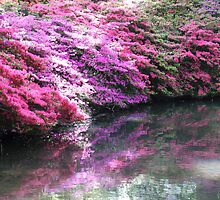 Pretty pink azaleas with shadow over stream  by design13