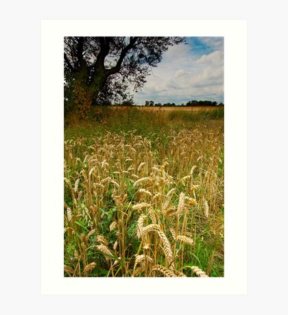 Late Summer Wheat Art Print