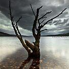 Loch Rannoch Tree by Brian Kerr