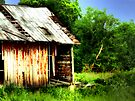 Old Barn  by Marcia Rubin