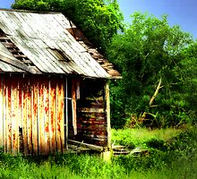 Old Barn  by Marcia Rubin