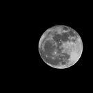 moonlight by colleen e scott