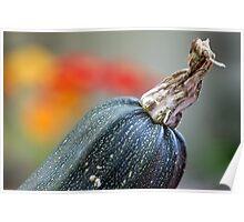 Courgette - Zucchini I Poster