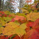 Fall, Boyne City, Michigan by Melissa Delaney