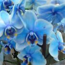 Blue Orchids by Andrea-D
