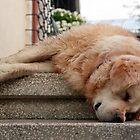 So Sleepy... by Alex Boros
