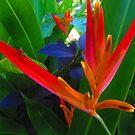 Exotic Plants by Bernhard Matejka