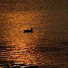 Sunset swim by Mechelep