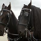 Two Beautiful Horses by Vicki Spindler (VHS Photography)